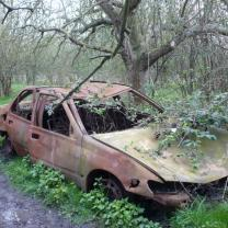 Wrecked car under a tree